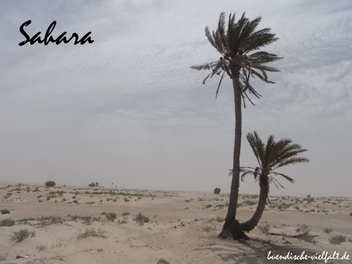 afrika-sahara